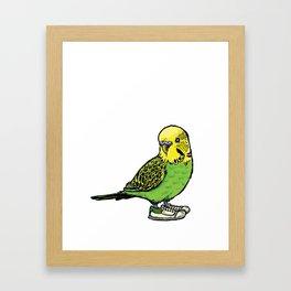 Budgie Framed Art Print