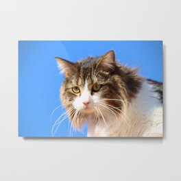 Kitty In The Sky Metal Print
