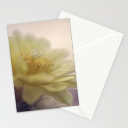 Magnifica Stationery Cards