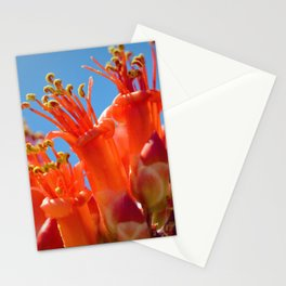 Octotillo Blossoms by Reay of Light Photography Stationery Cards
