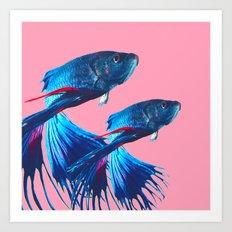 Betta fish Art Print