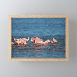 Roseate Spoonbills Framed Mini Art Print