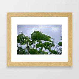 Leaf In The Rain Framed Art Print