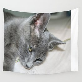 Close Up Of A Grey Kitten Wall Tapestry