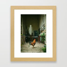 A Rooster in the studio Framed Art Print