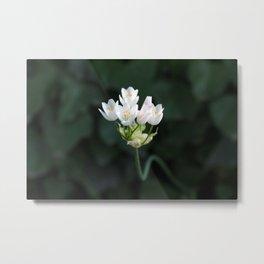 Tiny Little Flower Metal Print