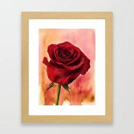 Red Red Rose Framed Art Print