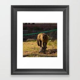 Monkey Business I Framed Art Print