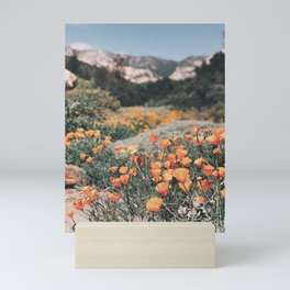 California Poppies // Santa Barbara, CA Mini Art Print
