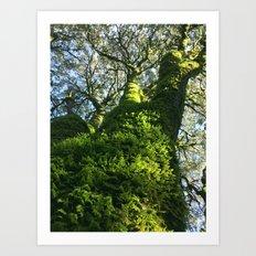 Trees! Castle Rock State Park - California Art Print