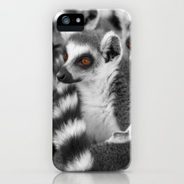 #Funny #Animals from #Madagascar iPhone Case