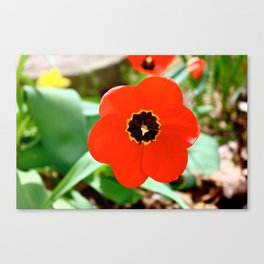 Red Portal Canvas Print