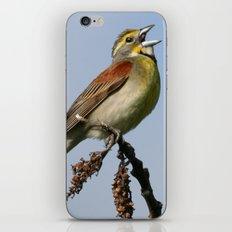 Dickcissel iPhone & iPod Skin