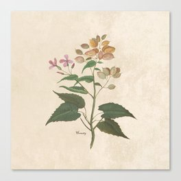 Honesty - botanical Canvas Print