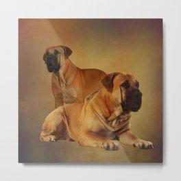 Boerboel - South African Mastiff Metal Print