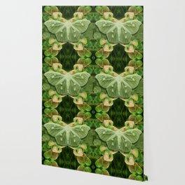 Green Glow Butterfly Wallpaper