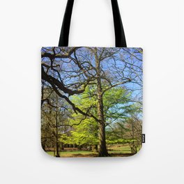 Spring Trees in Dunham Massey Park, England Tote Bag