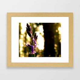 Blubells in Spring Framed Art Print