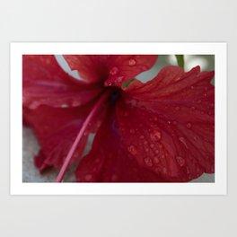 Belize Rain Art Print