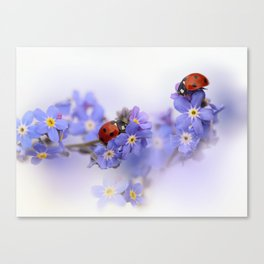 Ladybirds on Forget-me-not Canvas Print