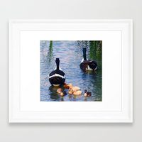 ducks Framed Art Prints featuring Ducks by DiDi Higginbotham