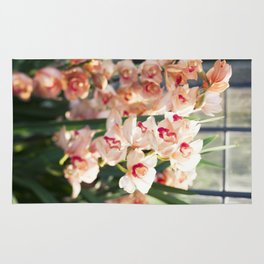 Orchid in the Sunlight  //  The Botanical Series Rug