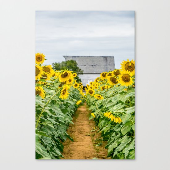 Follow the Yellow Flower Road Canvas Print