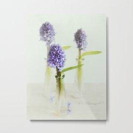blue Hyacinthus Metal Print
