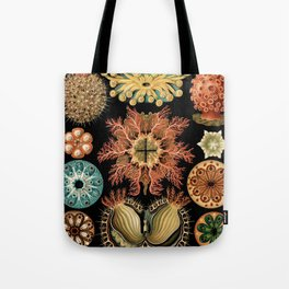 Sea Life Illustrations by Ernst Haeckel, 1904 Tote Bag