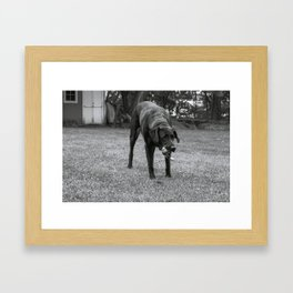 Play Dog Framed Art Print
