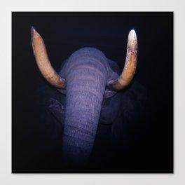 Elephant in the Dark Canvas Print