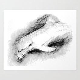 white dolphin Art Print