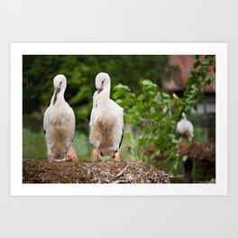 Orphaned two White Storks Art Print