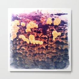 Mushroom 4 Metal Print