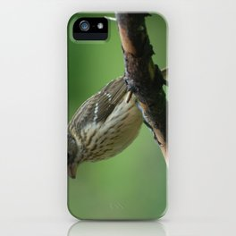 Female Red Breasted Grosbeak iPhone Case