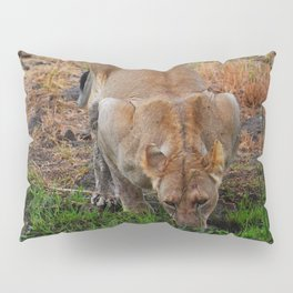 Lioness At The Waterhole Pillow Sham
