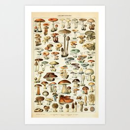 Vintage Mushroom & Fungi Chart by Adolphe Millot Art Print
