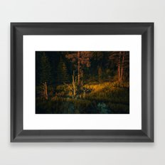 Drying out in the sun Framed Art Print