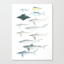 The Inhabitants of the Waters of Clipperton Atoll 2 Canvas Print