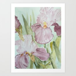 Lavender Beauties (irises) Art Print