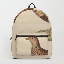 Large or Black bellied Sand Grouse 23 Backpack