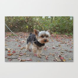 the NEW YORKIE Canvas Print
