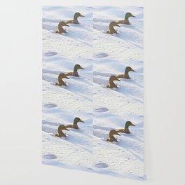 Ducks Swimming in Snow Wallpaper