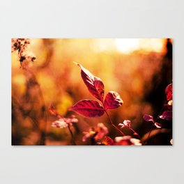 Red on Red Canvas Print