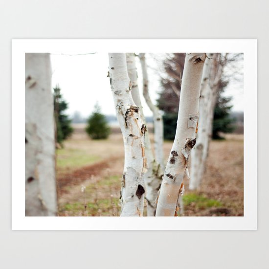 Line of Birches Art Print
