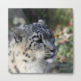 Leopard_2014_1103 Metal Print