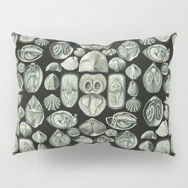Ernst Haeckel - Spirobranchia Pillow Sham