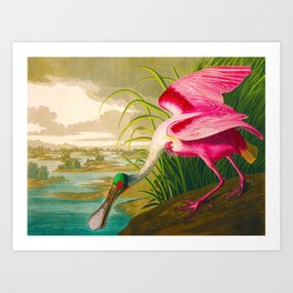 Roseate Spoonbill Bird pink Art Print