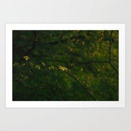 Beautiful Green Art Print