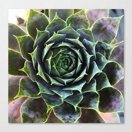 Sacred Succulent Canvas Print
